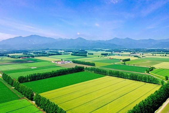 農薬散布に大活躍!農業におけるドローンの活用とは;